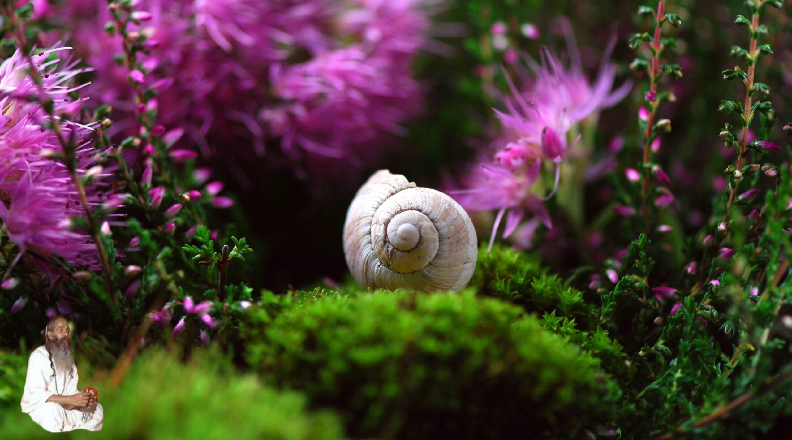 El Hatha Yoga y la Meditación